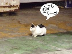 猫ちゃん、彼と彼女