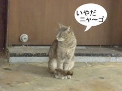 猫ちゃん、恋の駆け引き
