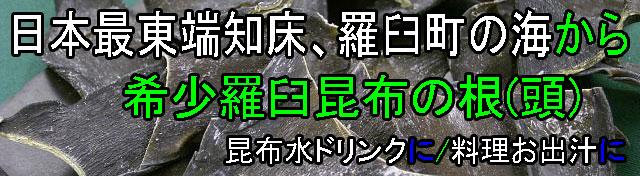 北海道羅臼町/羅臼昆布の根(頭)