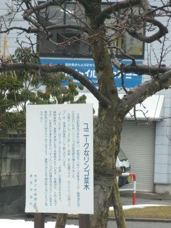 県道52号線魚津市のりんごの木