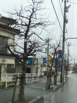 魚津インター通りの林檎並木