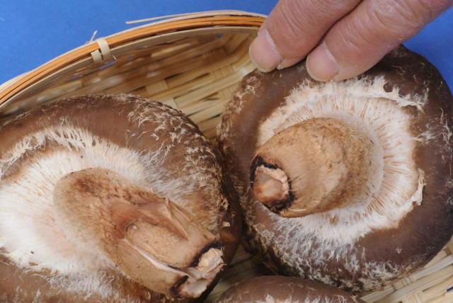 原木生産/生椎茸