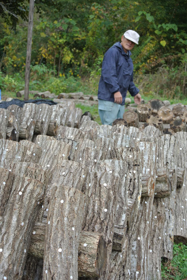 原木椎茸の生産