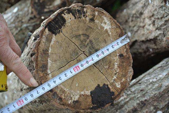 椎茸栽培原木