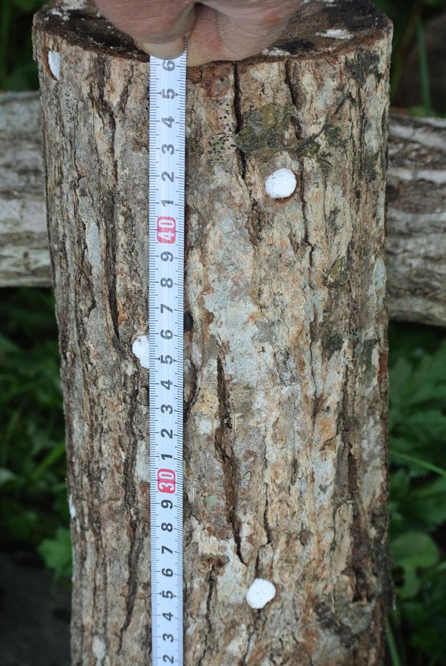 椎茸の家庭育成原木