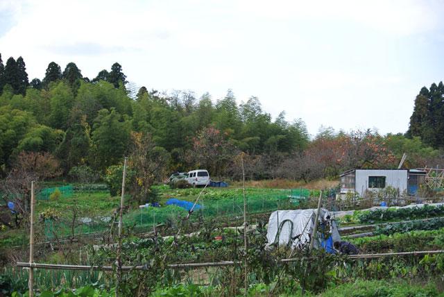 自然の栽培地は富山県射水市
